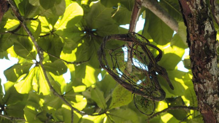 Filtro dos sonhos pendurado na árvore