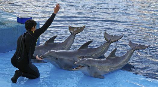 Golfinhos são mantidos em cativeiro e servem para apresentações