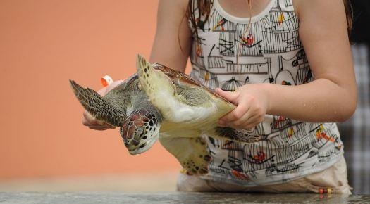 Atrações com animais silvestres geram estresse em tartarugas