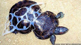Milhares de tartarugas e outras espécies marinhas morrem por causa de plásticos nos oceanos.