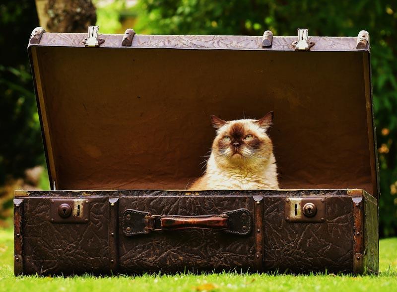 O que levar na mala de viagem? Confira algumas dicas!