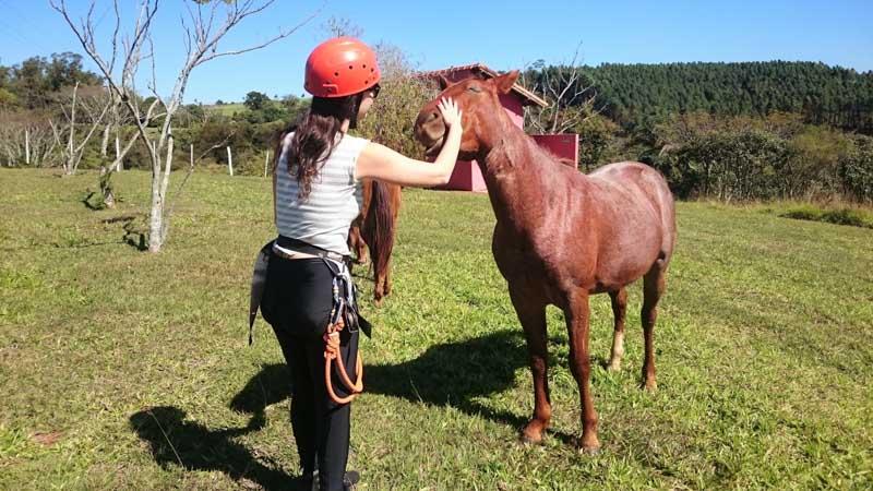 Cavalo feliz, solto e recebendo carinho no Sítio Sete Quedas em Brotas/SP