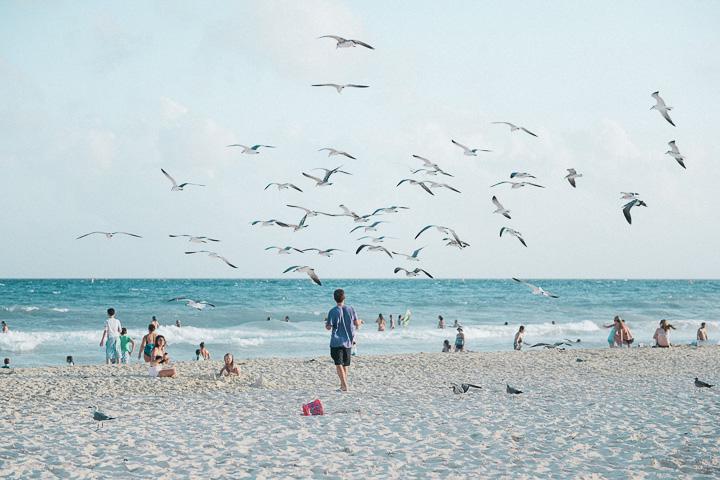 Pássaros voando na Playa Shangri em Playa del Carmen