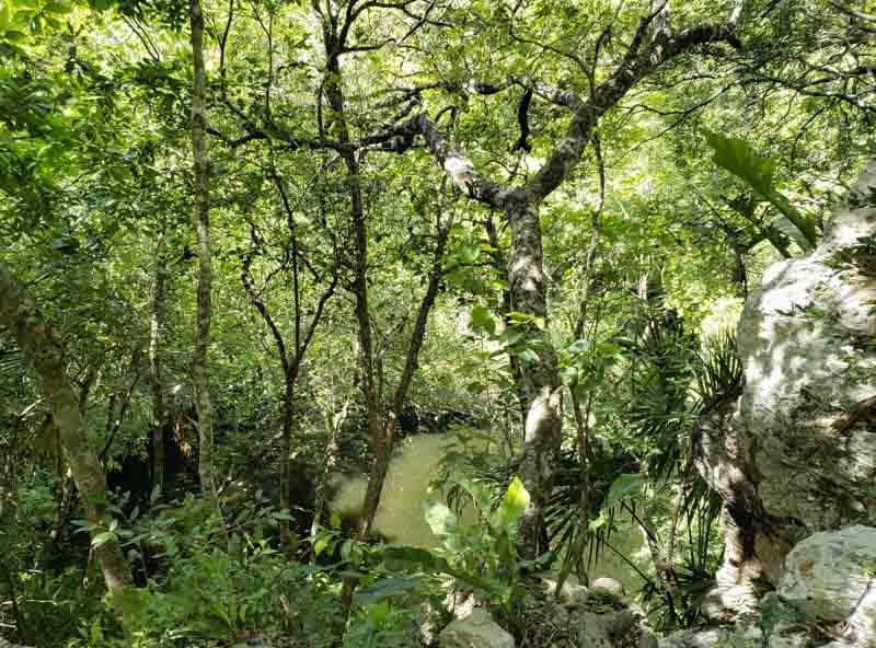Cenote Xtoloc noMéxico