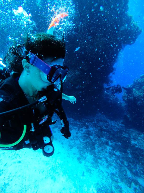 Mergulho dos recifes de Cozumel no México