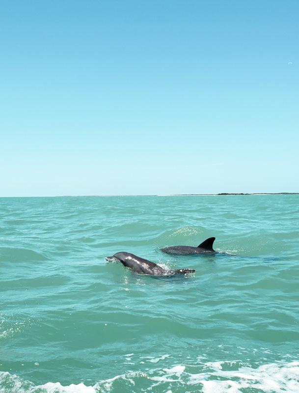 Golfinhos na Laguna de Términos no México