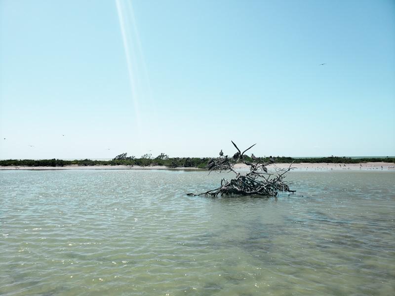 Isla Pájaros Laguna de Términos Campeche