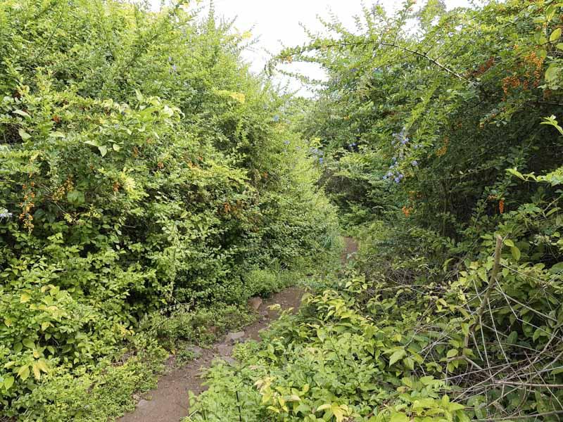 Reserva Florestal Isla Iguana Panamá